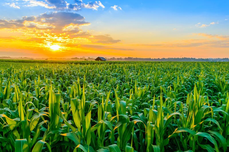 Study Shows Agriculture Emits More Sulfur Than Any Other Man-Made Source