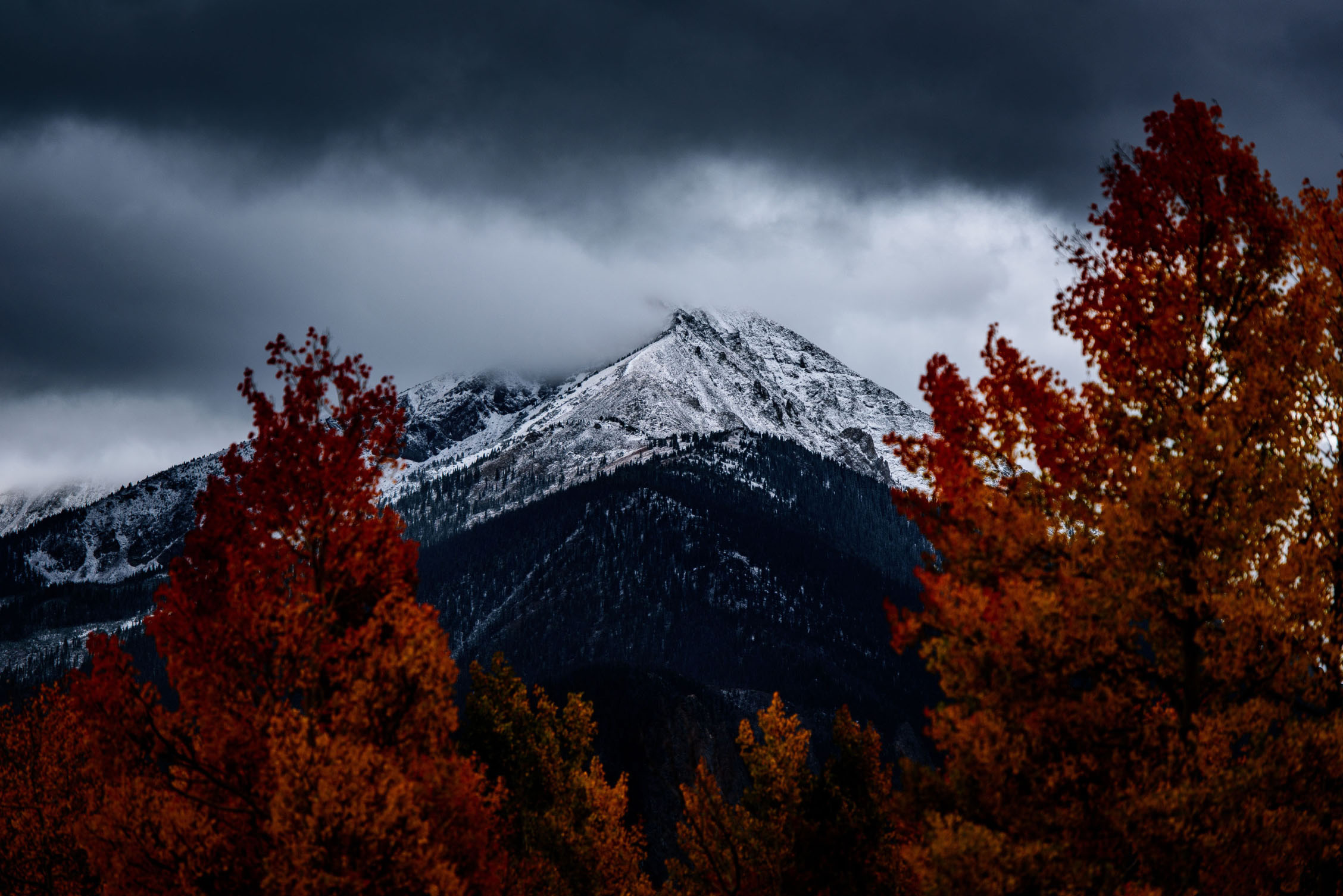 Fall trees with snowy mountains