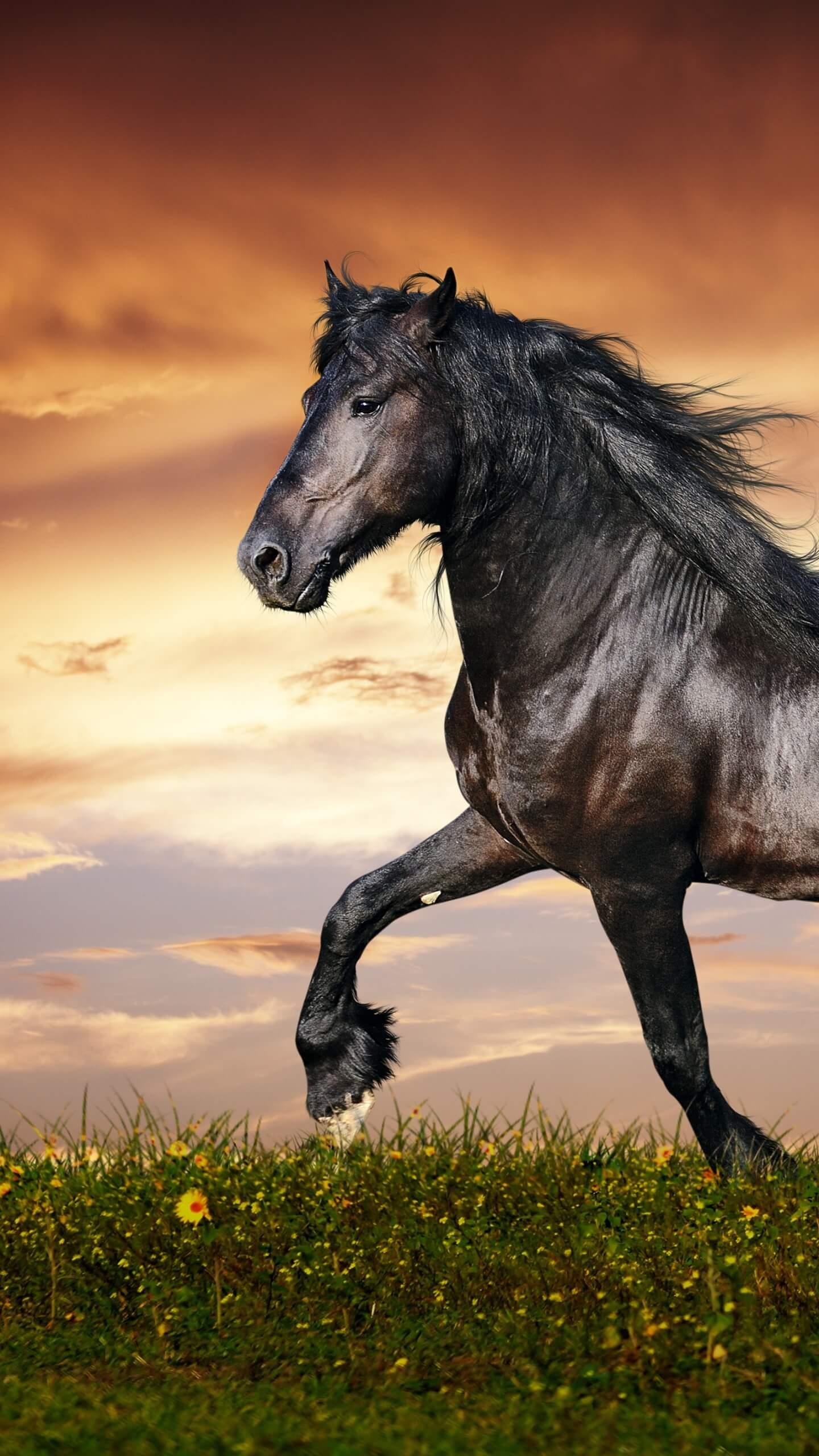 Wallpplus | Fondos de pantalla - Animales en HD